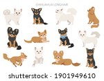 chihuahua dogs  in different... | Shutterstock .eps vector #1901949610