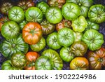 Fresh Ripe And Green Tomatoes ...