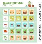 regrow vegetables from scraps... | Shutterstock .eps vector #1902517186