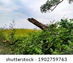 A Broken Tree Branch In The...