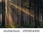 Sunrays In A Forest On A Hazy...