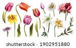 Set Of Spring Floral Elements....