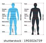 male size chart anatomy human... | Shutterstock .eps vector #1903026739