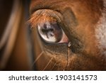 Close Up Of A Horses Blue Eye