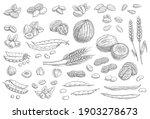 nuts  cereal grains sketch... | Shutterstock .eps vector #1903278673