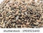Artichoke Thistle Seeds ...