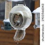 Squirrel Eating In A Bird Feeder