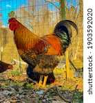 Golden Laced Wyandotte Roster...