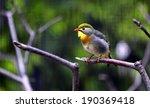 silver eared leiothrix   Shutterstock . vector #190369418