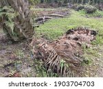 Fibre Decay Of The Palm Oil...