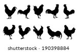 Rooster Silhouettes On The...