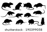 rat silhouettes on the white background - stock vector