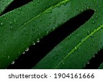 Background Of Wet Green...