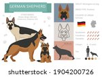 german shepherd dog isolated on ... | Shutterstock .eps vector #1904200726