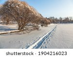 Small photo of Victory Park in Zelenograd in winter. Big beautiful willows are covered with snow. Blue sky, the sun is shining. Walking paths are trodden on the snow. Bright shadows.