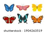 Set Of Butterflies Of Different ...