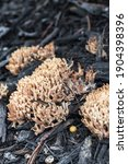 Selective Focus On Coral Fungus ...