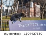 A Squirrel Climbing On Top Of A ...
