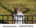 A Squirrel Climbing Over A...