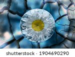 The Beautiful Daisy Flower In A ...