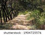 Secret Thorny Path Through The...