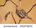 levaillant's cisticola bird... | Shutterstock . vector #190474853
