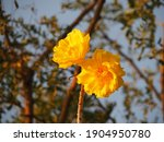 Yellow Flower On Leaf And Sky...