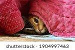 Playful Orange Tabby Cat Is...