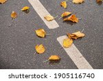 Wet Fallen Orange Autumn Leaves ...