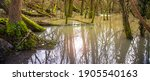 Bog Forest  Water Flooded Trees ...