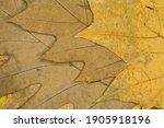 Full Frame Shot Of Dried Leaves ...
