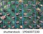 Full Frame Of Blurred Plant's...