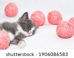 Gray Kitten With Pink Balls Of...