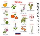 texas. set of usa official... | Shutterstock .eps vector #1906186159