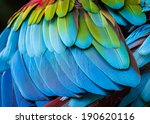 Close Up Of Parrot Feathers Fo...