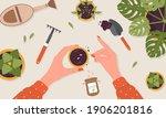 spring seedlings. woman plants... | Shutterstock .eps vector #1906201816