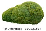 round ornamental bush isolated... | Shutterstock . vector #190621514