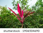 Subtropical Forest With...
