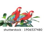 Two Ara Parrots  Scarlet Macaw  ...