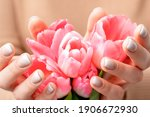 Closeup Of Pink Tulip Buds In...