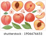 Peach Set Hand Drawing With...