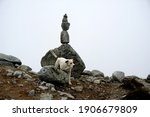 Stones stacked on top of each other in a pillar. Against the white cloud backdrop.Stone piles on top of each other and a white dog, Slovakia. High Tatras national park