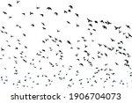 White Flock Of Birds Flying