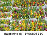 Selective Focus Of Multicolored ...