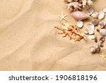 Beautiful Seashells  Coral And...