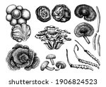 medicinal mushroom...   Shutterstock .eps vector #1906824523