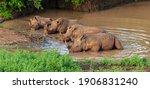 White Rhino Lying In The Water...