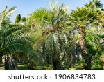 Exotic Landscape With Palm...