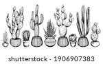 set of potted cactus plants....   Shutterstock .eps vector #1906907383