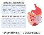 intestinal microflora. normal...   Shutterstock .eps vector #1906958833